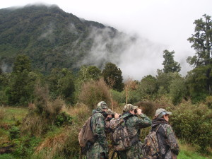 Glassing in the rain forest of New Zealand 2011
